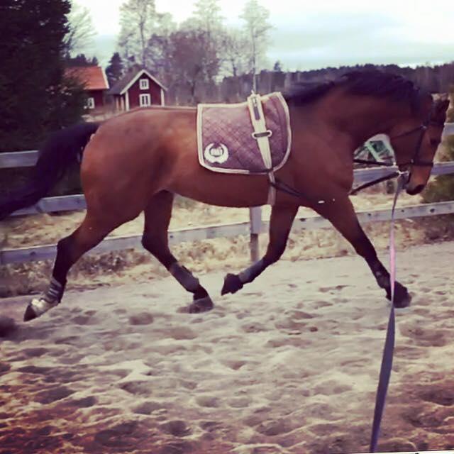 igångsättning häst efter föl