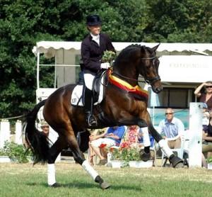 Herzensdieb - vinnare av  3-årschampionat med Helen Langenhanenberg i sadeln