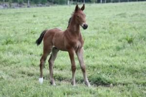Cantoz e Canterbury - Robin Z, 2 veckor gammal